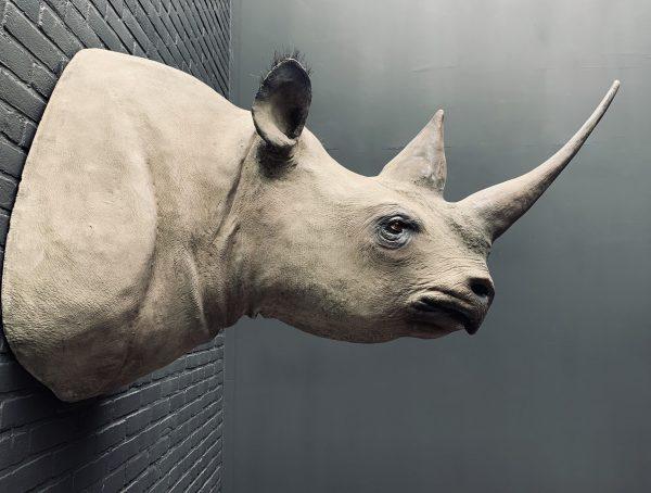 Afgietsel van een echte zwarte neushoorn