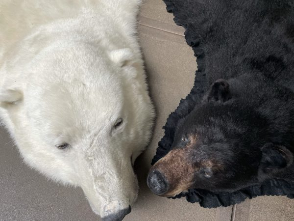 Prachtige wintervacht van een grote ijsbeer