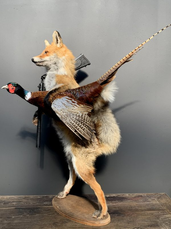 Unieke opgezette jagende vos met fazant
