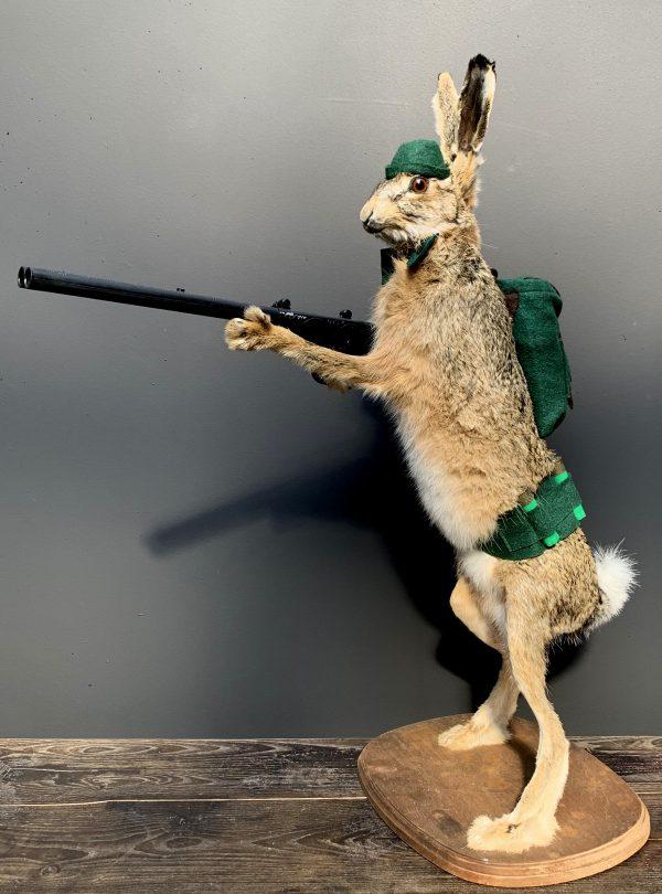 Opgezette haas met geweer. Jagende haas