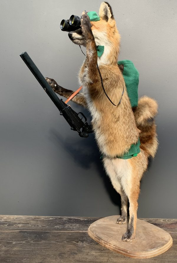 Einzigartiger ausgestopfter Jagdfuchs