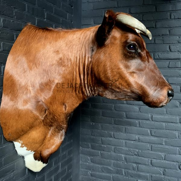 Taxidermy Red Cow