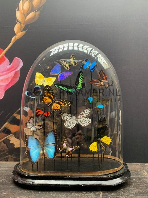 Oval antique dome with colourful mix of many butterfly species