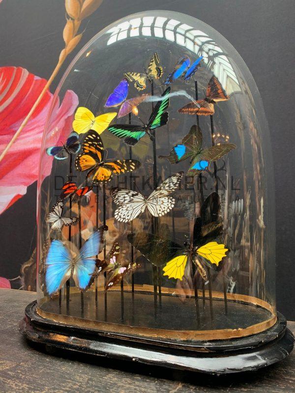 Ovalen oude stolp met kleurrijke mix van vele vlindersoorten. Vlinderstolp