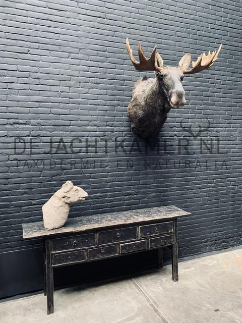 Mounted head of a Scandinavian moose