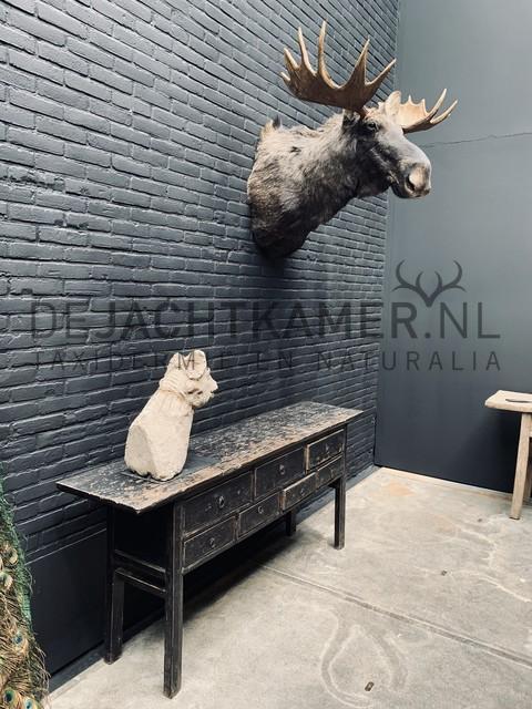 Opgezette kop van een Scandinavische eland. Elandkop