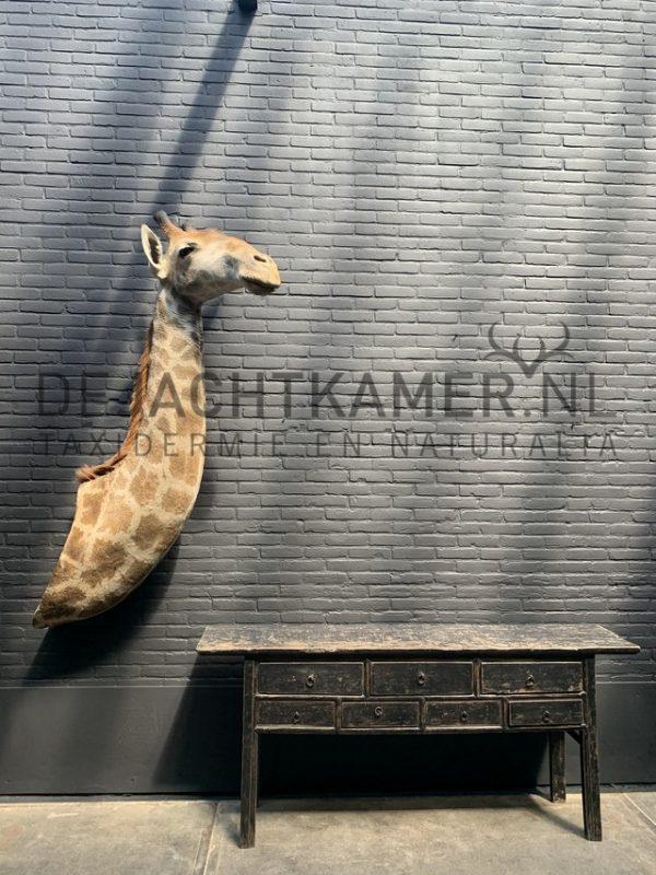 Opgezette kop van een giraffe.