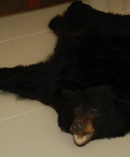 Grote huid van een zwarte beer. Berenvel