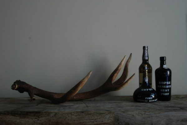 Antler of a red stag.