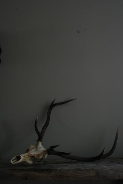 Decoratief oude schedel van een edelhert.