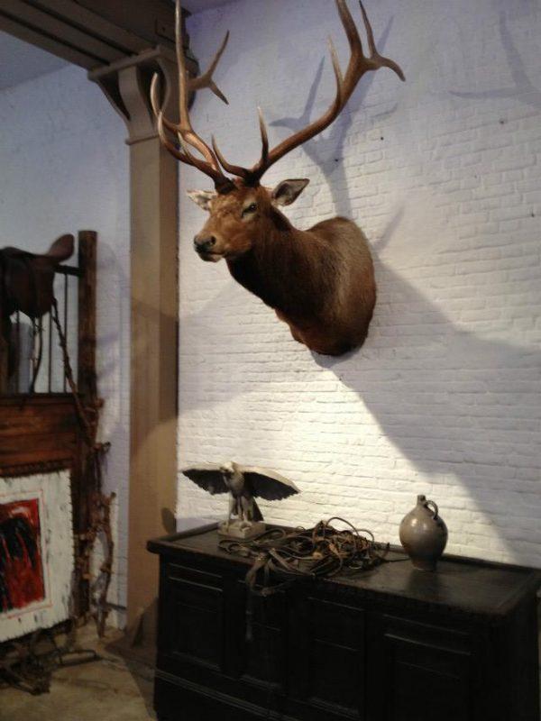 New hunting trophy of a huge wapiti.