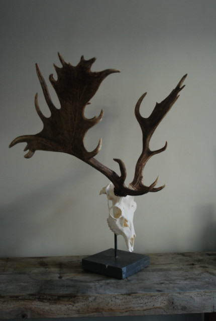 Unique and abnorm pair of antlers, of a fallow deer on a hard stone base.