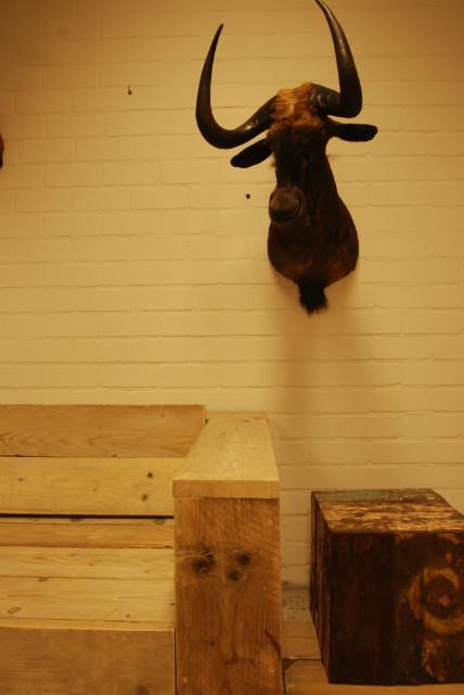 Taxidermy head of a black wildebeast.