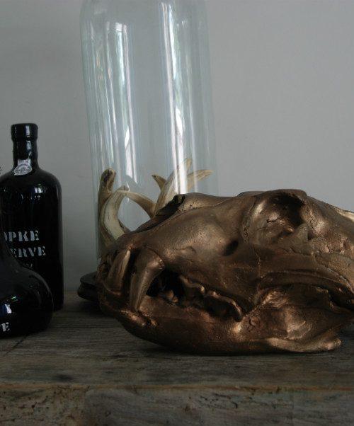 Bronzen replica van een echte leeuwenschedel. schedel van een leeuw.