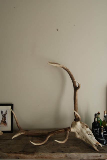 Pair of antlers of a red stag.