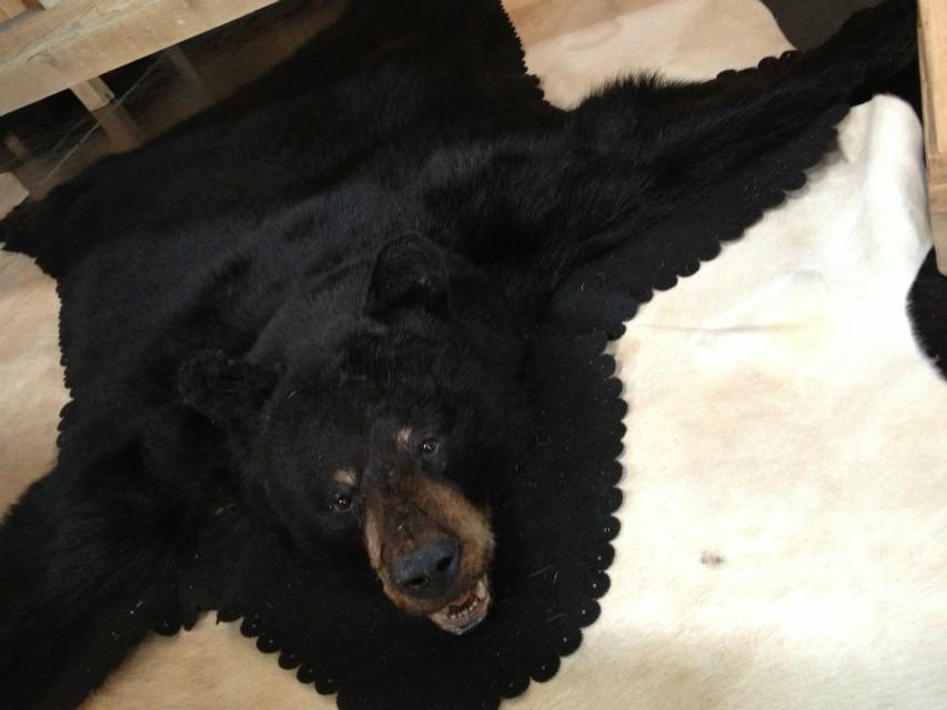 Grote huid van een zwarte beer.
