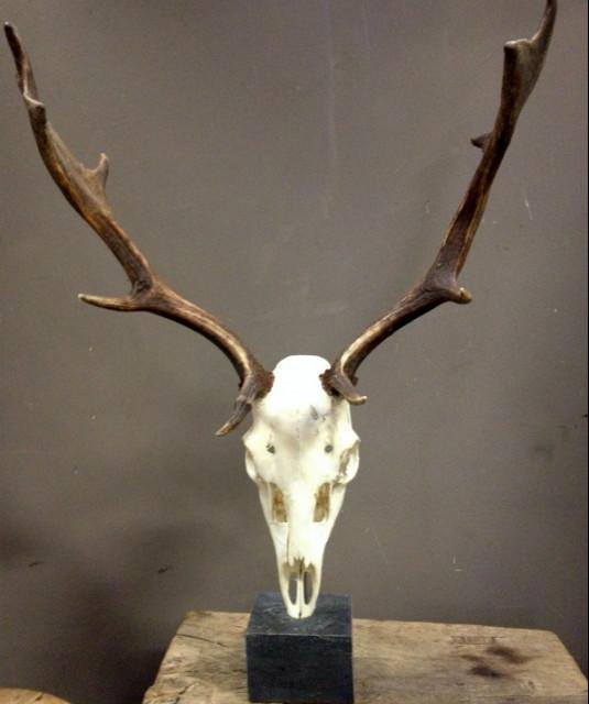 Skulls of fallow deer mounted on hard stone pedestals