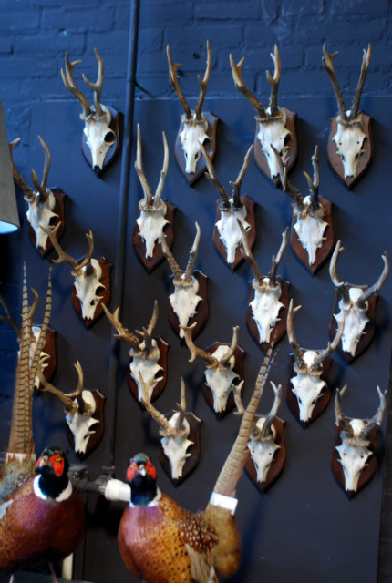 Large collection of big antlers of roe bock.