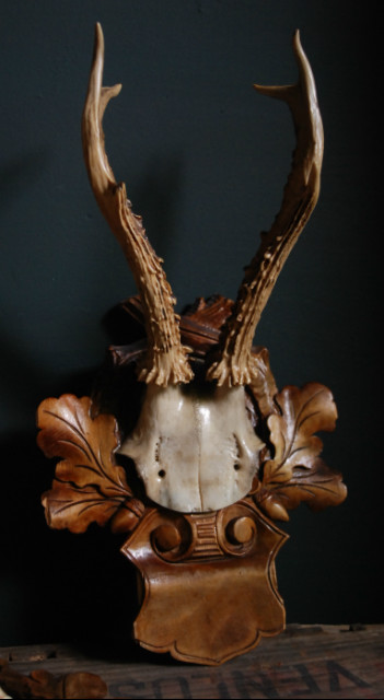 Set of 3 antique roe buck antlers.
