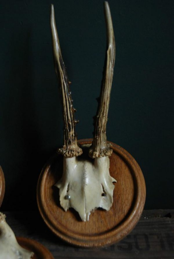 Set of 3 antique roebuck antlers