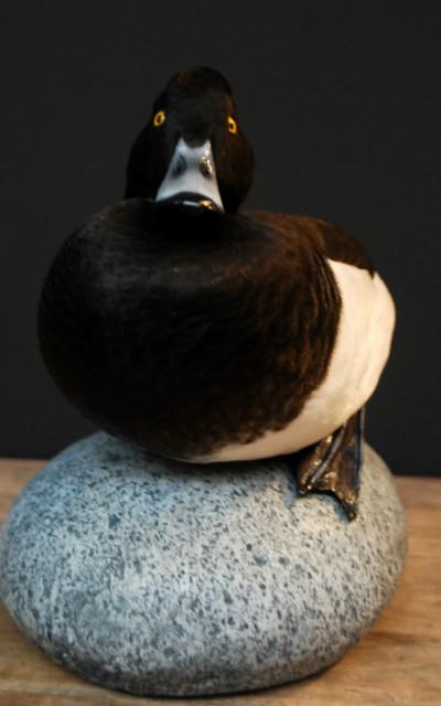 Beautiful stuffed tufted duck..