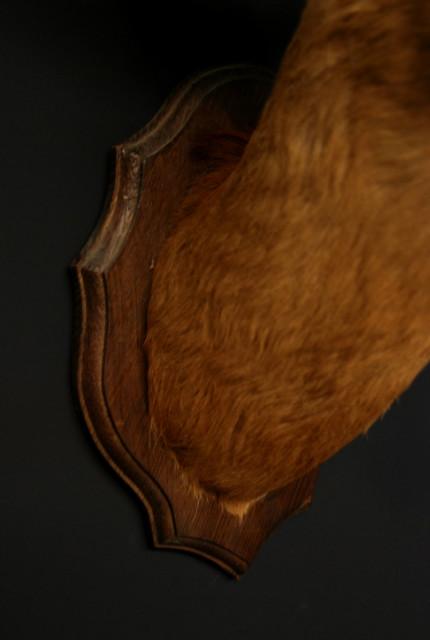 Vintage stuffed head of a beautiful buck.