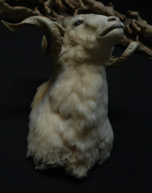 Very impressive stuffed head of a merino ram.