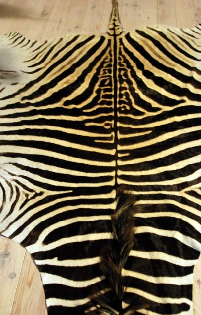 A grade zebravel