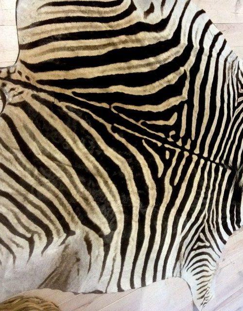 Nieuw recent gelooide zebrahuid.