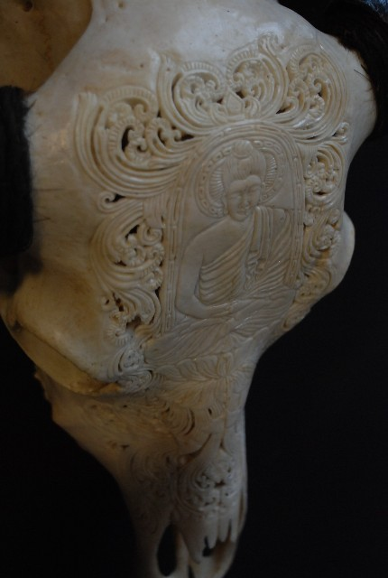 Exclusive carved skull of a water buffalo