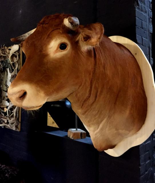 Stuffed head of an ox