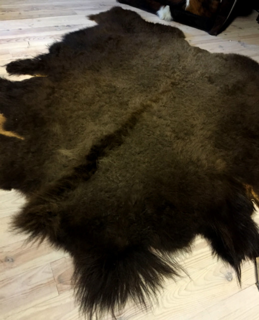 Zeer grote huid van een Amerikaanse bizon. Het is een nieuwe huid en in een perfecte staat.