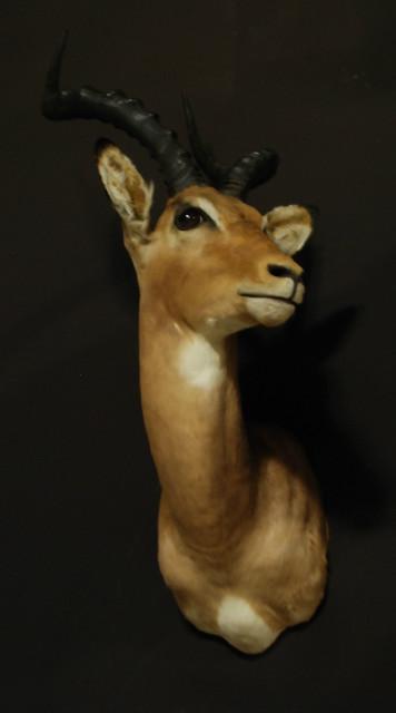 Fine trophy head of an impala.