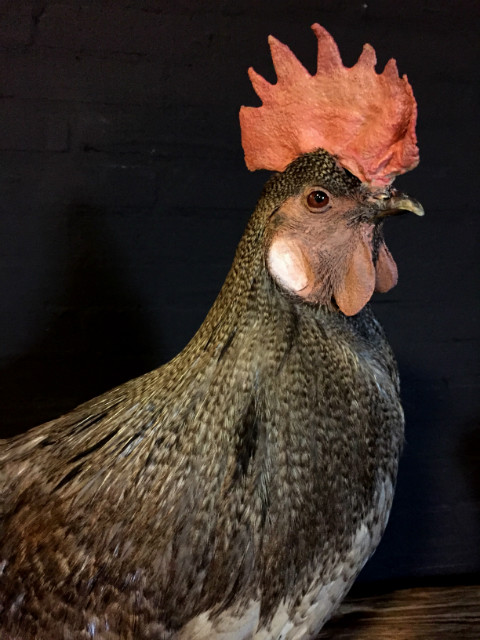 Recently stuffed large roosters