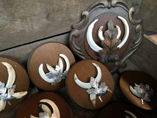 Lot 5, 12 wild boar tusks on wooden panel