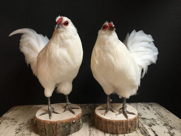 Stuffed white stylish chickens.