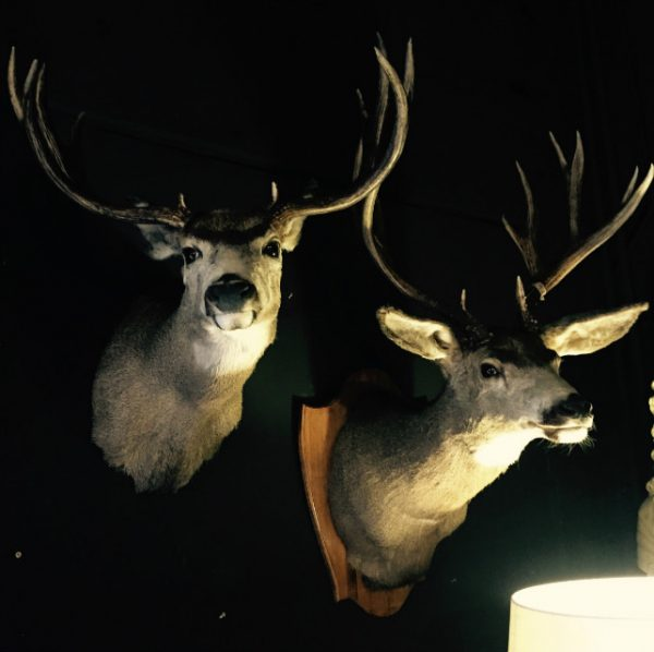 Unique trophy heads of mule- and whitetaildeer
