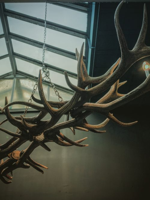 Oblong hanging lamp made of red deer antlers