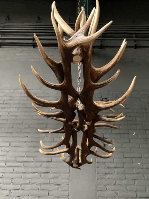 Elongated antler lamp made of red deer antlers