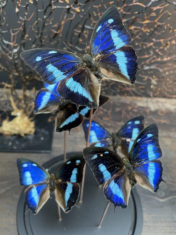 Moderne stolp gevuld met diverse vlinders