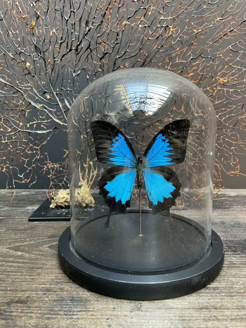 Modern dome filled with a beautiful butterfly