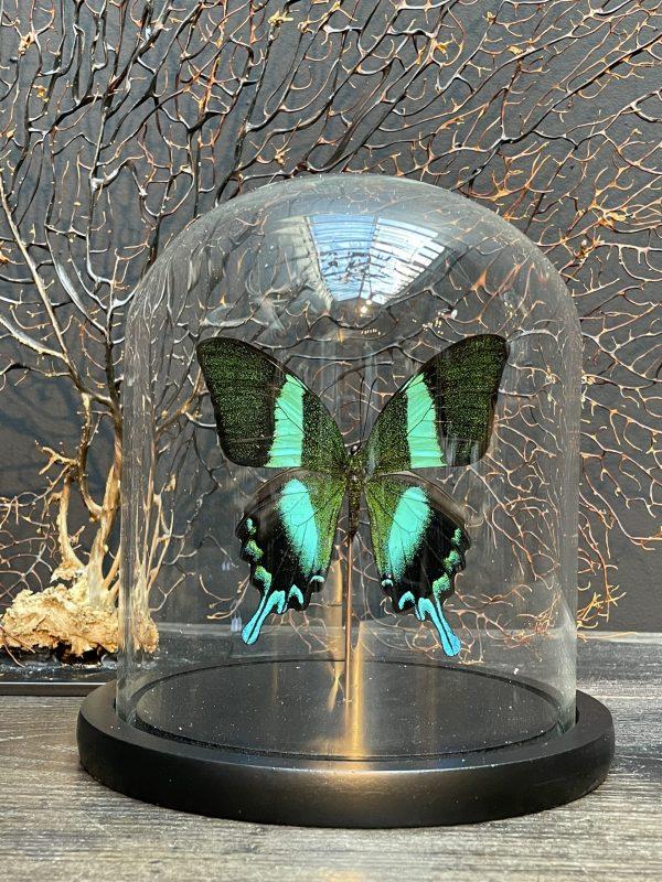 Moderne stolp gevuld met een prachtige vlinder