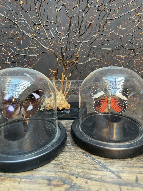 Modern small dome with beautiful butterfly