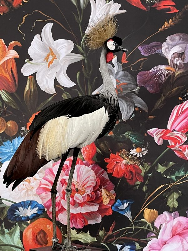 Opgezette kroonkraanvogel