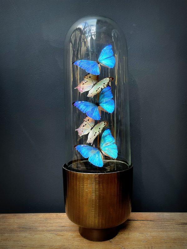 Moderne Bullet stolp met Morpho Adonis en Salamis vlinders