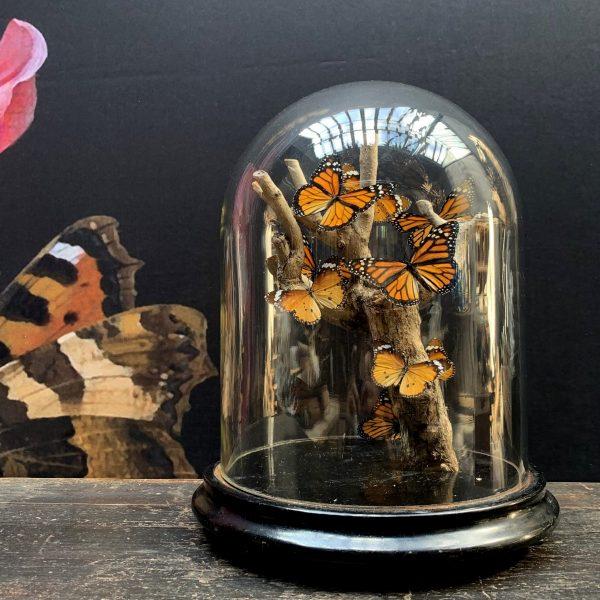 Antique bell with butterflies (Danaus Chrysipus).