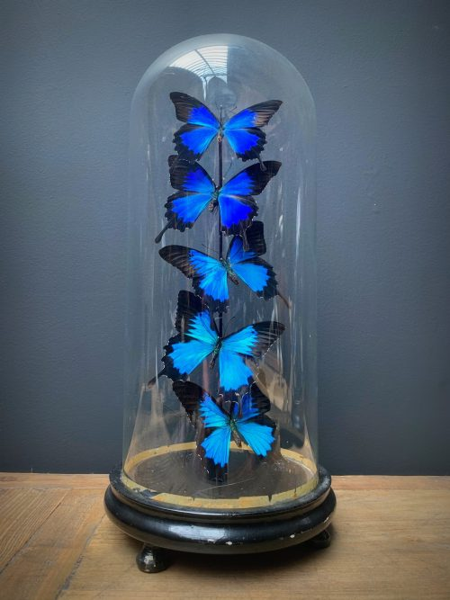 Antique dome with blue butterflies
