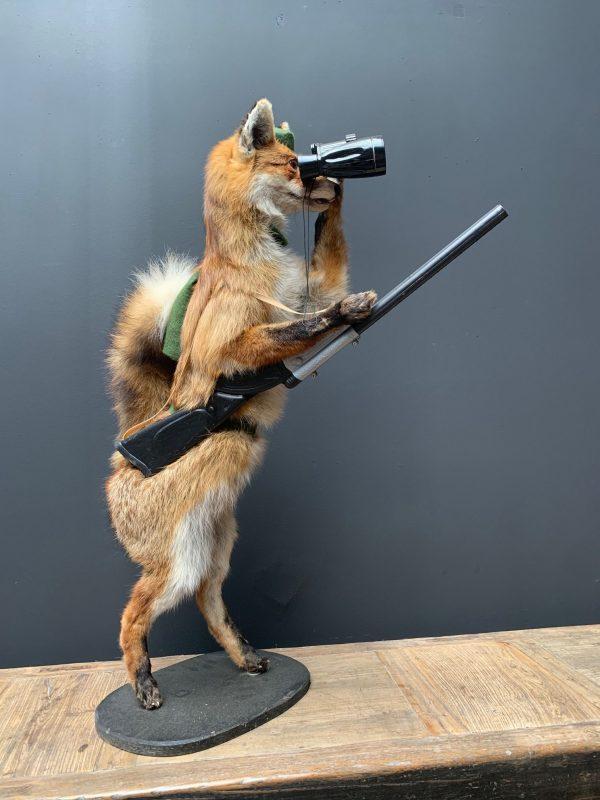 Unieke opgezette jagende vos