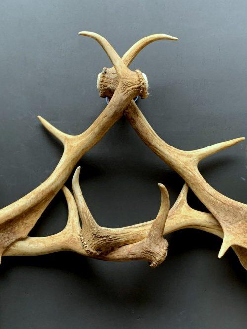 Wall lamp made of fallow deer antlers