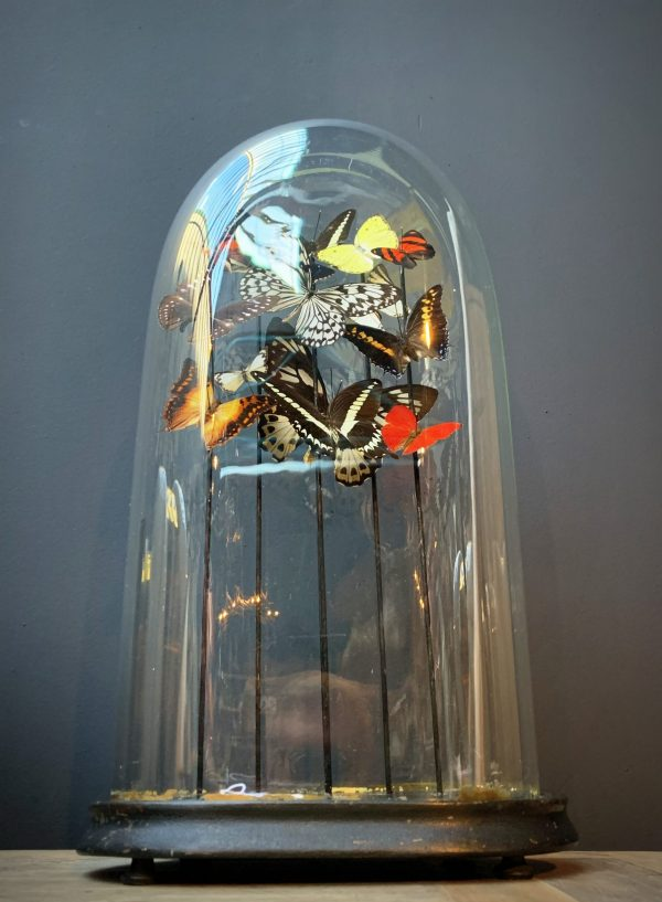 Antieke ovale stolp gevuld met een mix van kleurrijke vlinders (herfsttinten)